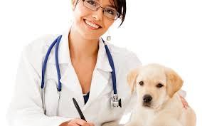 clinica veterinaria em sorocaba